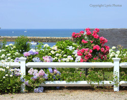 cape cod ocean view garden photo
