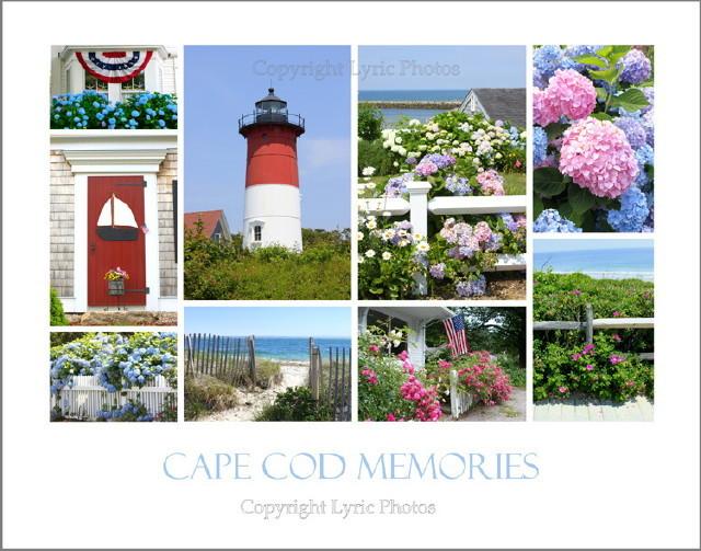 cape cod memories poster hydrangeas