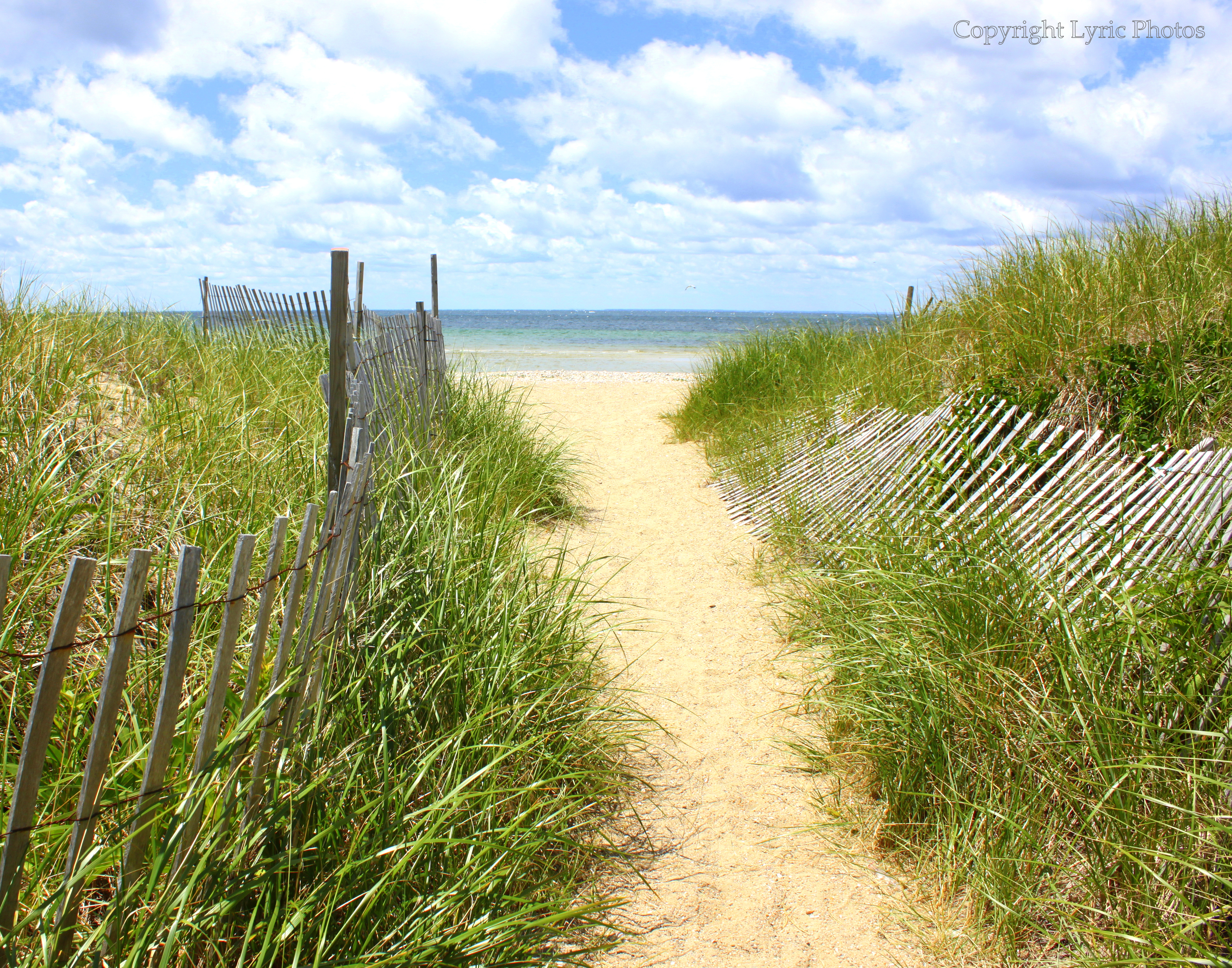 Sippewissett beach dune photograph