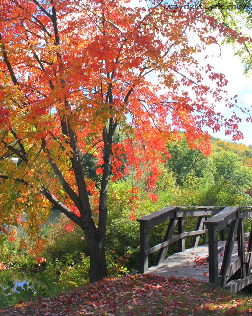 New England Bridge fall NH