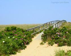 Boardwalk Sandwich MA Beach