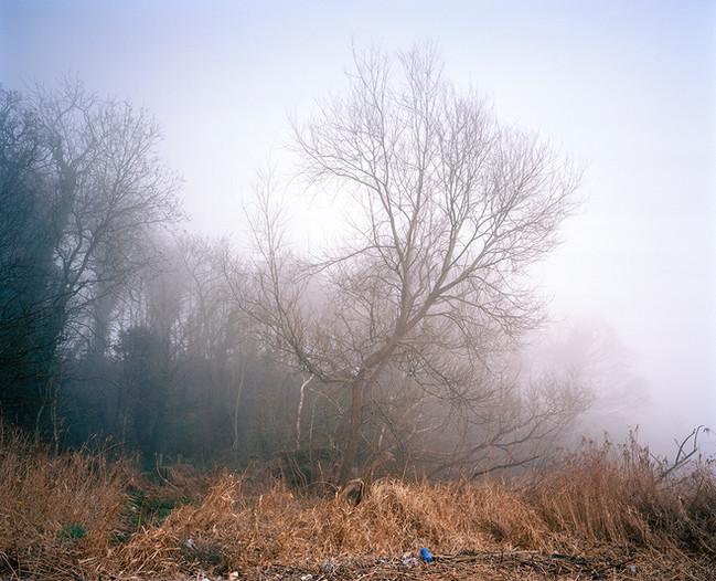 Salix Fragilis in Fog.jpg
