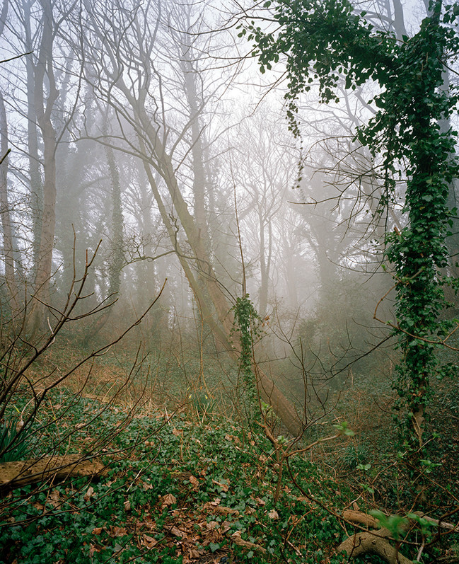 Grove in Fog 2.jpg