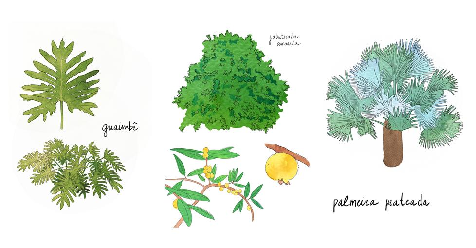 site mapa mos plantas4.png