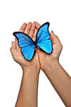 Hands Holding A Blue Butterfly.jpg