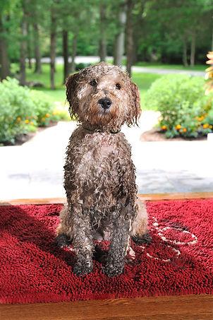 dirty dog on the doorstep.