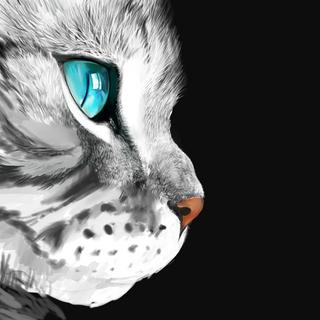 Cat_5