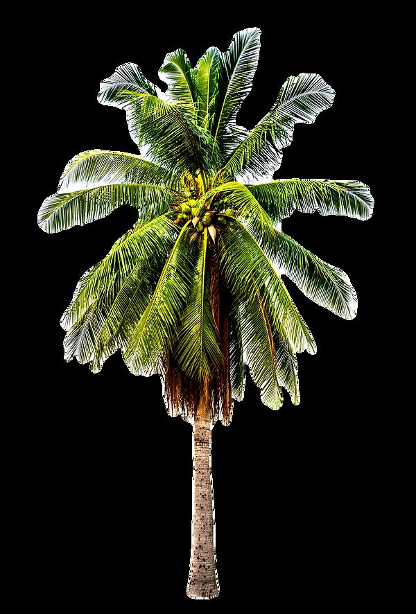 Palm Tree_edited_edited_edited.png