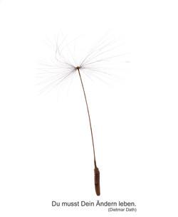 Pusteblume-einzeln-Bild1.jpg