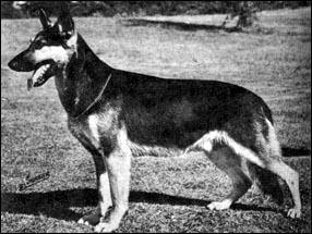 1952 Grand Victor