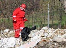 220px-Rescue_dog.