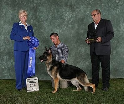 2012 BOF  Futurity Victrix