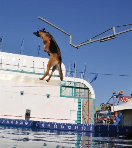 dockdog