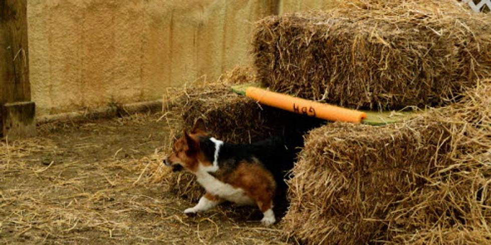 Barn Hunt TUNNELS for beginners (registration open)