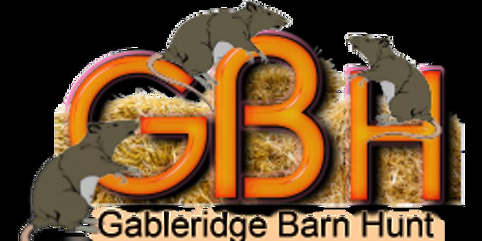 GABLERIGE BARN HUNT - Fun Test (BHA# FTLE-18063)