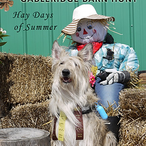 Aug 10, 2019 Barn Hunt Event