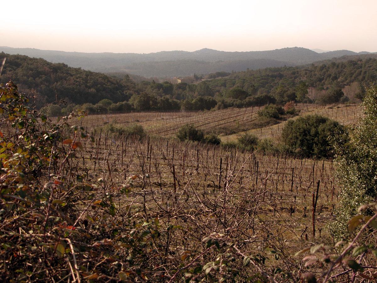 en février, l'hiver sur le vignoble