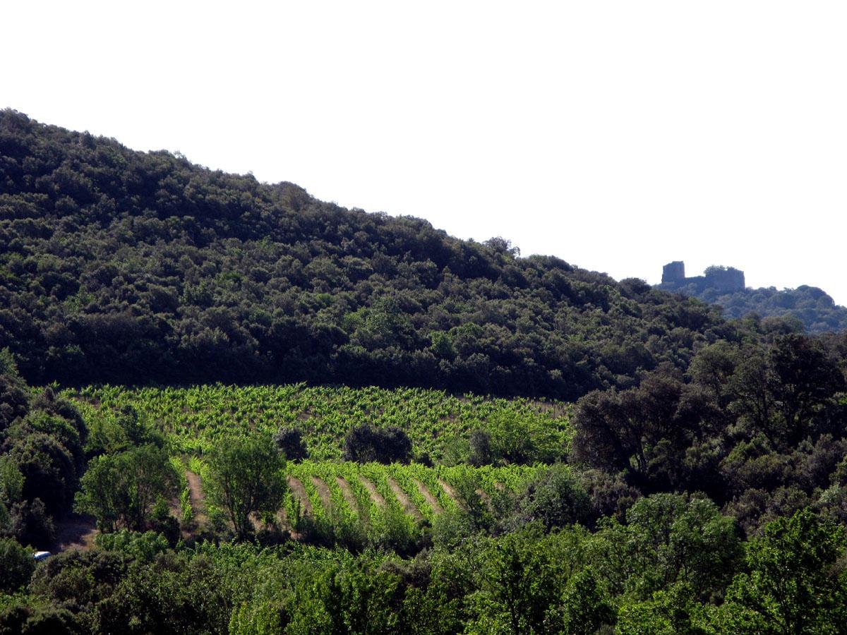 le chateau de Fressac veille sur le domaine