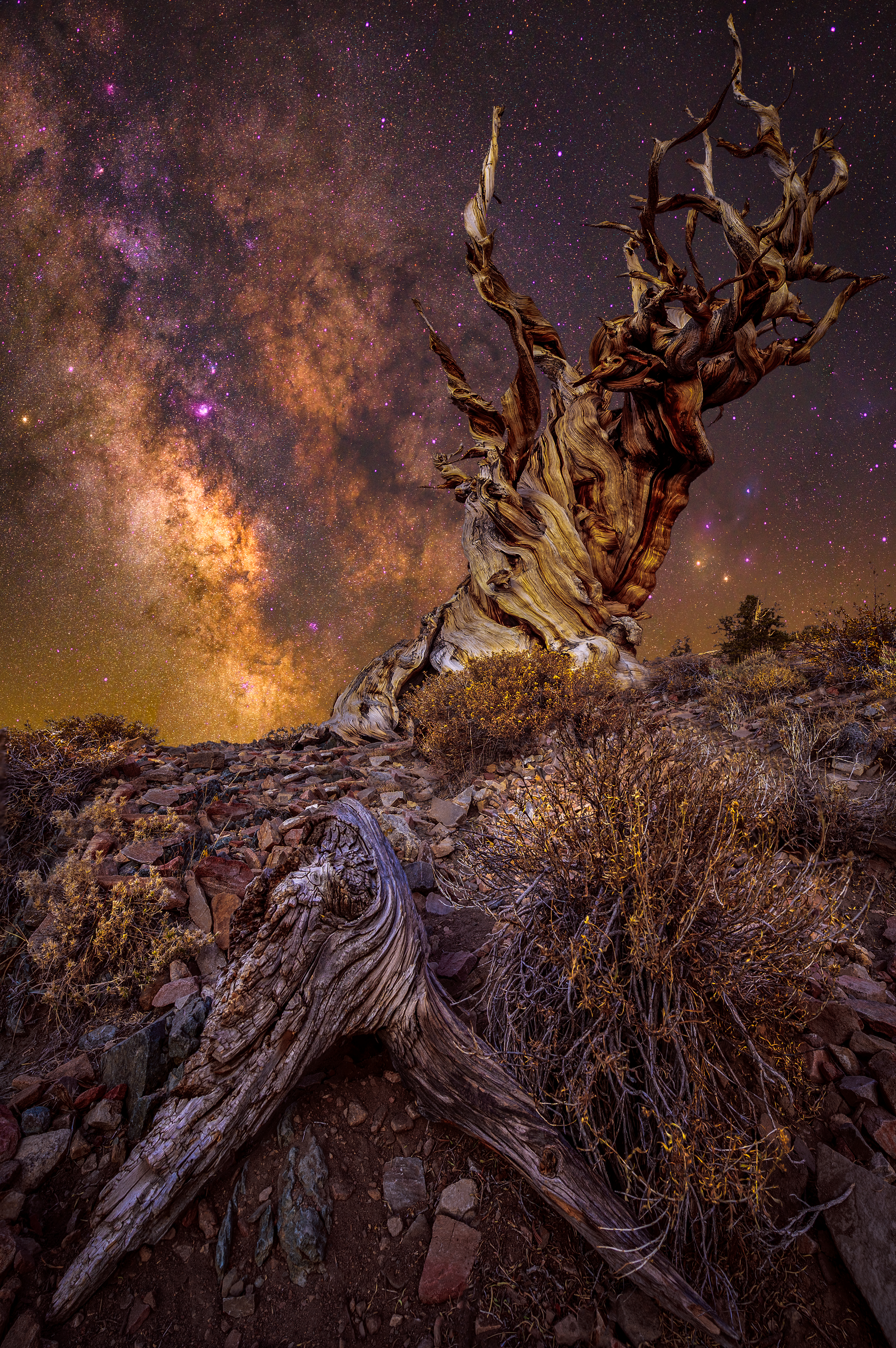 Ancient Tree, California