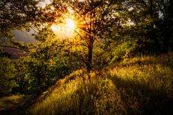 Welden Trail