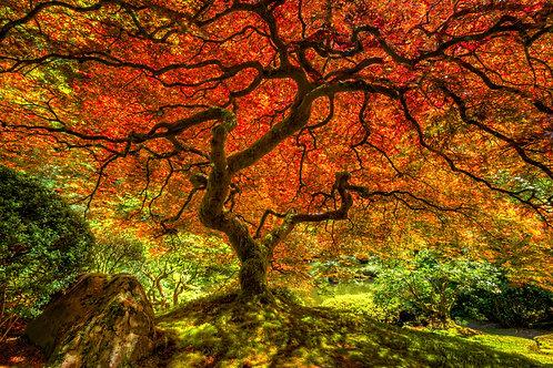 The Tree, Oregon