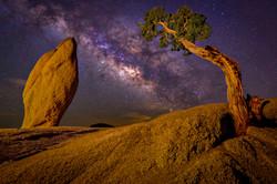 Tree and Rock  V2
