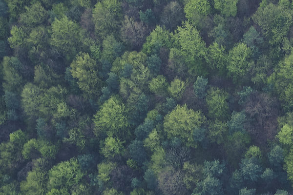 Drone Forest
