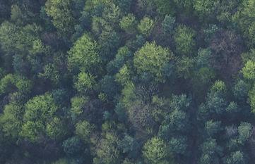 Die Natur ist unser Weg zur Heilung