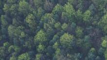 Tree Planting in Sevenoaks