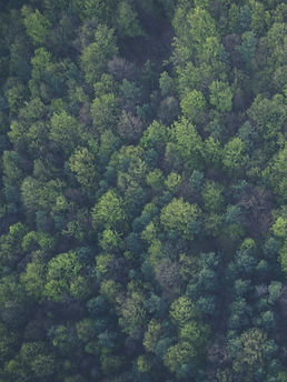 Bird's eye view of a green forest