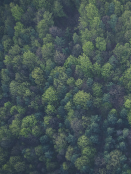 Drone Photo Woods