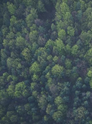 «Илим» получил премию за ответственное лесопользование