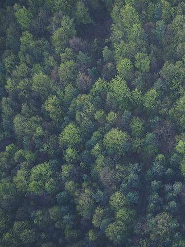 Flagstaff Forest