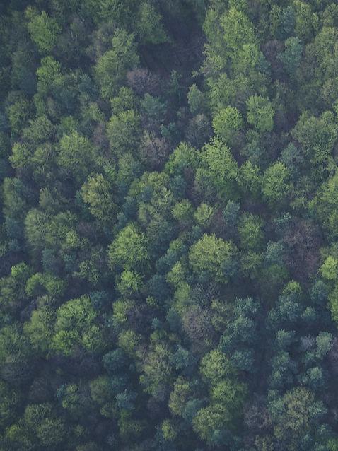 Ein Nadelwald von oben betrachtet
