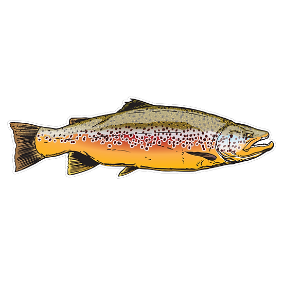 """3"""" x 10"""" Brown Trout - 2014"""