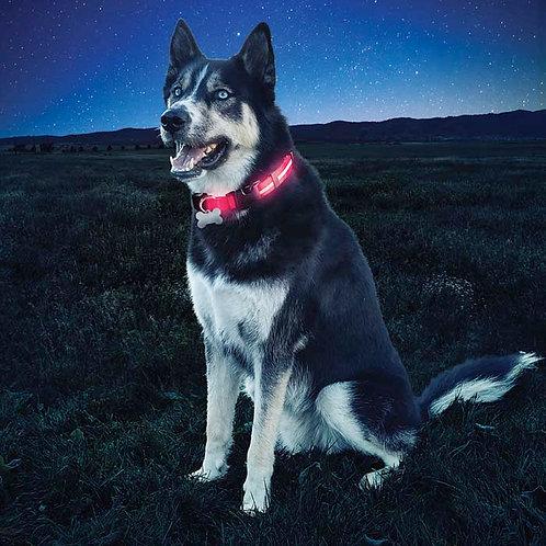 Nite Ize NiteDawg LED Light-Up Dog Collar (M,L)