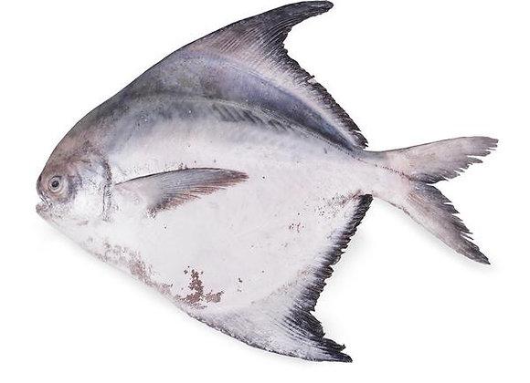 Chinese Pomfret 斗鲳 Whole Clean 800-1000gm