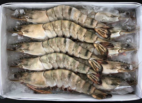 Tiger Prawn Whole XL 8-10pc/kg