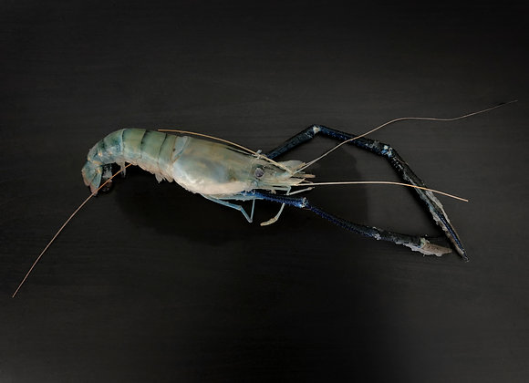River Prawn (Scampi) M 7pc/pkt