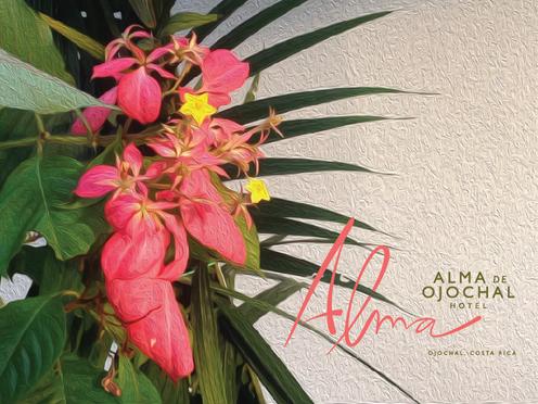 ALMA HOTEL IDENTITY