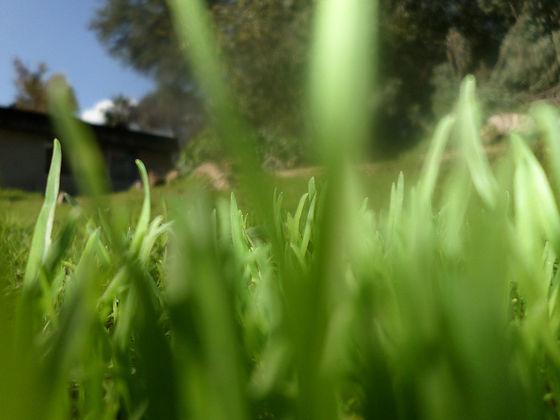 דשא.jpeg