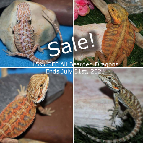 15% OFF All Bearded Dragons!