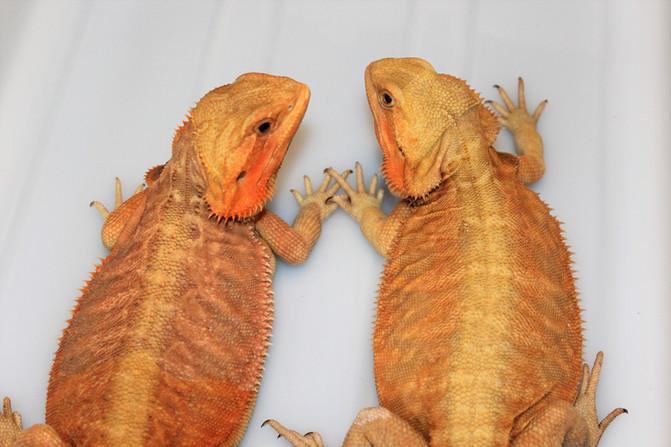 More Future Breeders!