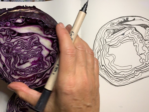 Red Cabbage Observational Drawings