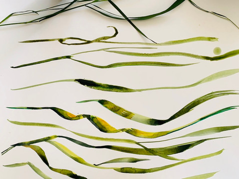 Grass Ribbons