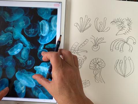 Sea Anemones & Jellyfish Drawings