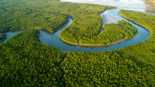 Canva - Aerial Mangrove Forest View.jpg