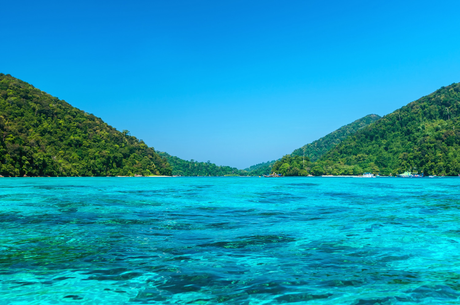 Canva - Beautiful turquoise sea at Surin