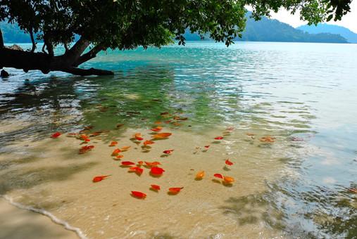 Canva - Surin island national park (2).j