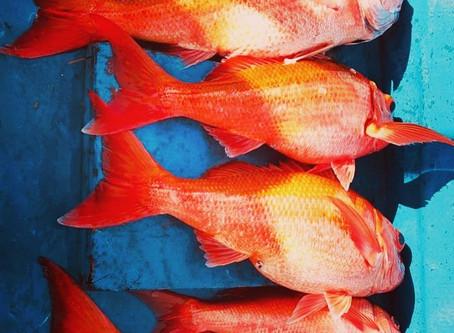 Большая рыбалка на Пхукете